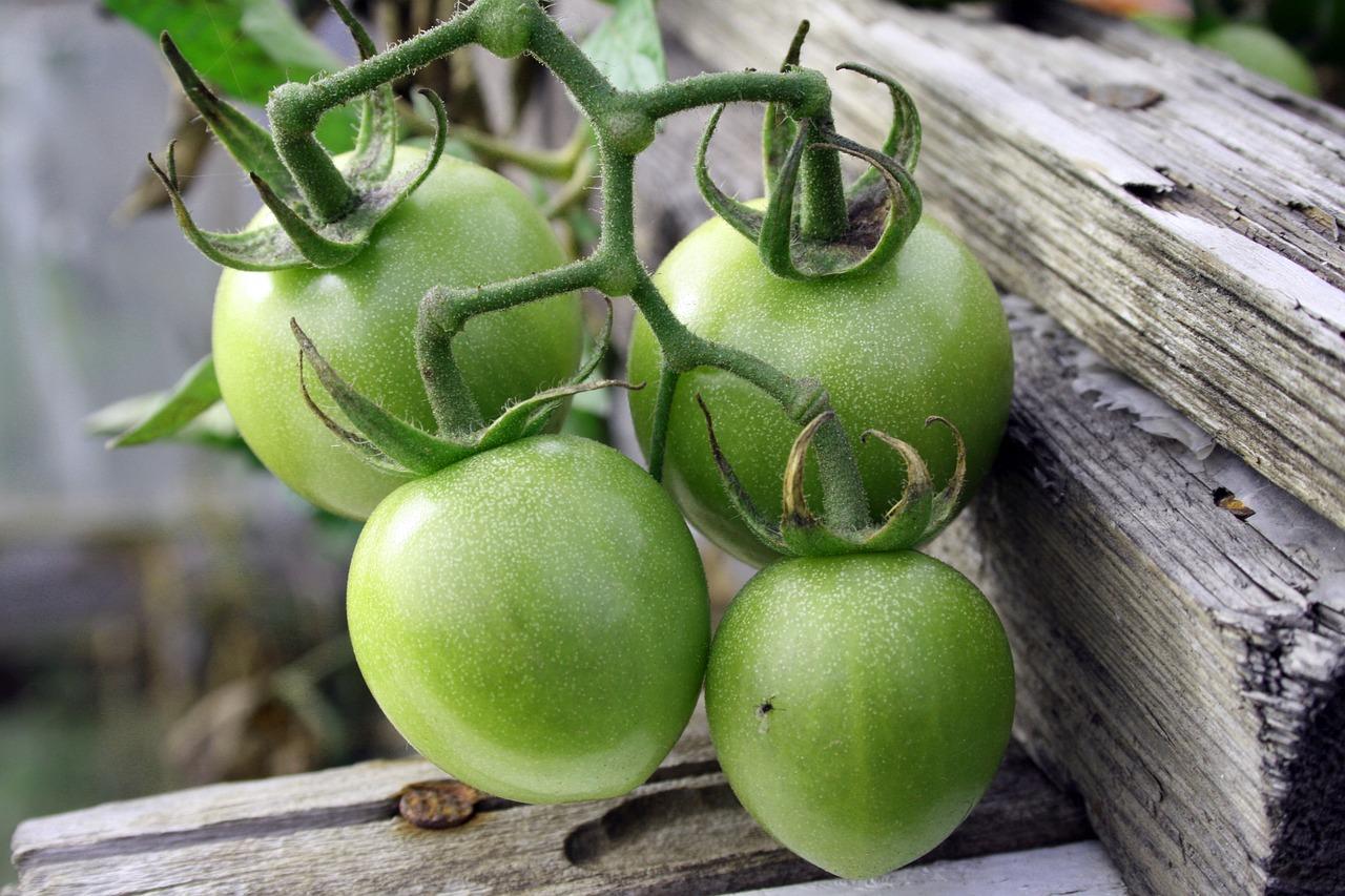 Außergewöhnlich Kartoffeln und Tomaten: giftig? - Hungry for Science @FW_16