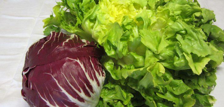 Bitterstoffe in Salat: Endiviensalatkopf, Radicchiosalatkopf