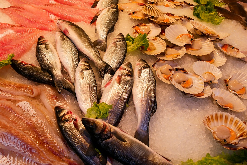 Fisch Gesund