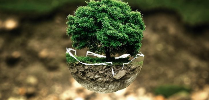 Schwebender Baum in Schale, Umweltschutz